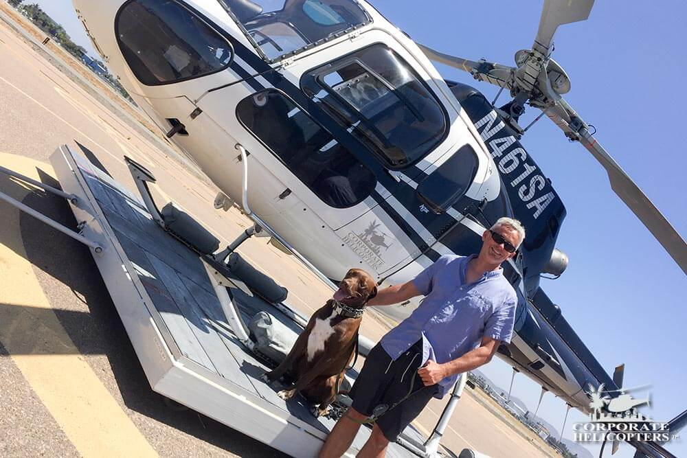 Dogs and helicopters